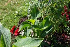 spinkleutrustning bak blommor royaltyfri foto