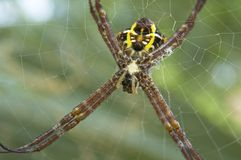 Spinne 2 Stockbilder
