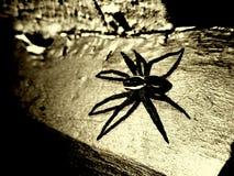 Spinne lizenzfreies stockfoto