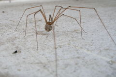 Spinne stockfotos