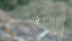 Spinne stock footage