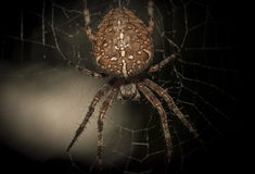 spinne Stockbild