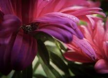 Spinne auf Blume Stockfoto
