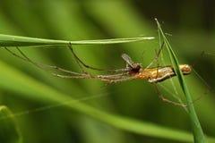 Spinne auf dem Gras Stockfoto