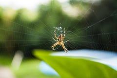 Spinne auf dem Netz stockbild