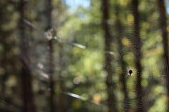 Spinne auf dem Netz Stockfoto