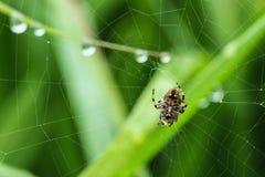 Spinne auf dem Netz Stockbilder