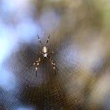 Spinne auf dem Netz lizenzfreies stockfoto