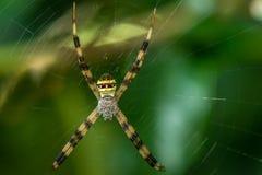 Spinne auf dem Netz stockfotografie