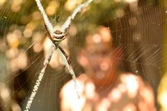 Spinne auf dem Netzblick gruselig und furchtsam auf Naturhintergrund Stockfotografie