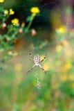 Spinne auf dem Web lizenzfreies stockbild