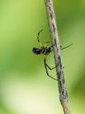 Spinne auf dem Web Stockbilder