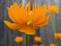 Spinne auf der Blume stockbild