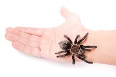 Spinne auf der Hand Stockbilder