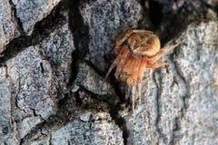 Spinne auf der tree-/onbarkenbeschaffenheit Stockfoto