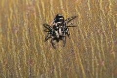 Spinne auf der Wand Stockfotos