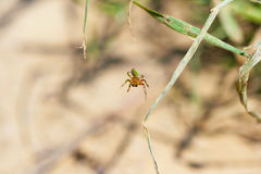 Spinne auf einem Blatt Stockbild