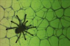 Spinne auf einem Blatt Lizenzfreie Stockfotografie