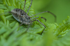 Spinne auf einem Farnbetriebsmakro Lizenzfreie Stockfotografie