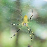 Spinne auf einem Netz lizenzfreie stockbilder