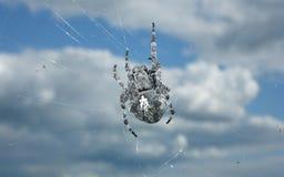 Spinne auf einem Netz der Himmel und die Wolken Stockbild