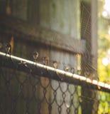 Spinne auf einem Netz in einem Hinterhof Lizenzfreie Stockfotos