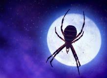 Spinne auf einem Netz gegen einen nächtlichen Himmel mit einem Mond stockfotos