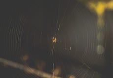 Spinne auf einem Netz im Sonnenlicht Stockfoto