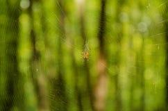 Spinne auf einem Netz im Wald Lizenzfreies Stockbild