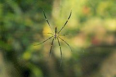 Spinne auf einem Spinnenweb stockfoto