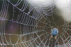 Spinne auf einem Web lizenzfreie stockfotografie