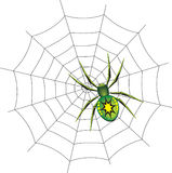 Spinne auf einem Web. Stockfoto
