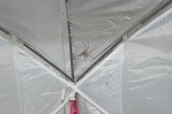 Spinne auf einem Zelt Stockfotos