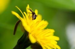 Spinne auf einer Blume Lizenzfreies Stockfoto