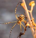 Spinne auf einer Niederlassung lizenzfreie stockfotos