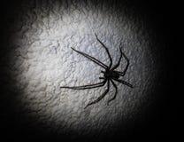 Spinne auf einer weißen Wand Lizenzfreie Stockfotos