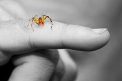 Spinne auf Finger des Mannes Lizenzfreie Stockbilder