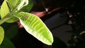 Spinne auf grünem Blatt lizenzfreies stockbild