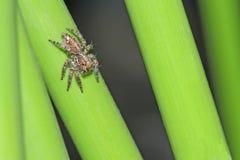 Spinne auf Gras im Garten lizenzfreie stockbilder