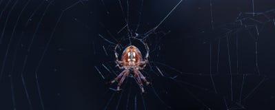 Spinne auf ihrem Web Lizenzfreies Stockbild