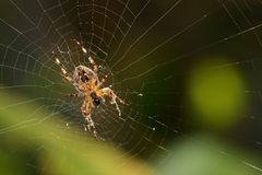 Spinne auf Netz Stockfoto