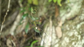 Spinne auf Netz stock video footage