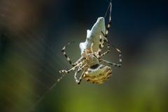 Spinne auf Netz mit Bergbau Stockfoto