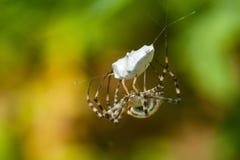 Spinne auf Netz mit Bergbau Lizenzfreie Stockfotografie