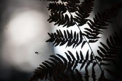 Spinne auf Netz nachts stockfotografie