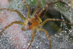 Spinne auf seinem Web Lizenzfreies Stockbild