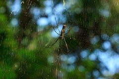 Spinne auf seinem Web stockfotos