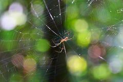 Spinne auf seinem Web Lizenzfreie Stockbilder