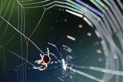 Spinne auf spiderweb lizenzfreie stockfotos