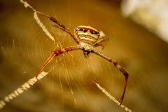 Spinne auf Spinnennetz lizenzfreie stockfotos